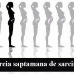 Saptamana 3 de sarcina